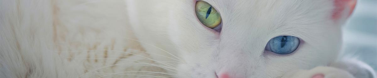 Ветеринарный центр ЮАО круглосуточно: переломы у собак и кошек - ветеринарная клиника