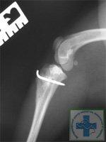 Остеосинтез бугристости большеберцовой кости у собаки (спустя 3 месяца)